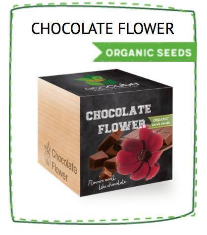 Ecocube Feel Green Trendline - Chocolate Flower - Plants - The Planet Collection - Naiise