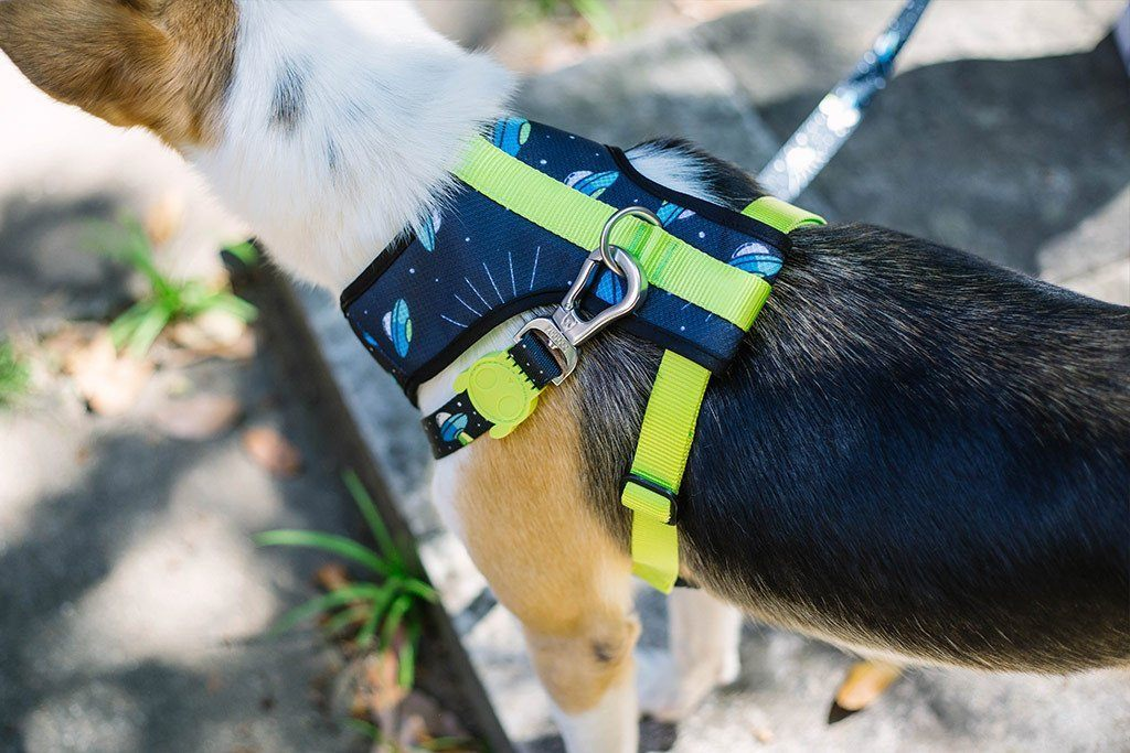 Area 51 Air Mesh Plus Harness - Pet Harnesses - Zee.Dog - Naiise
