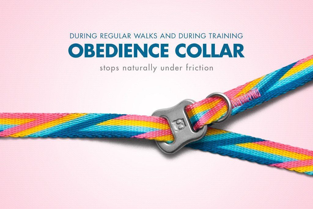 Bowie Obedience Dog Collar - Dog Collars - Zee.Dog - Naiise
