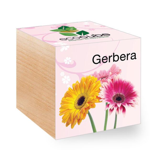 Ecocube Exotics - Gerbera Gardening Kits Feel Green