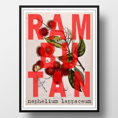 Scientific Rambutan Print - Prints - Big Red Chilli - Naiise