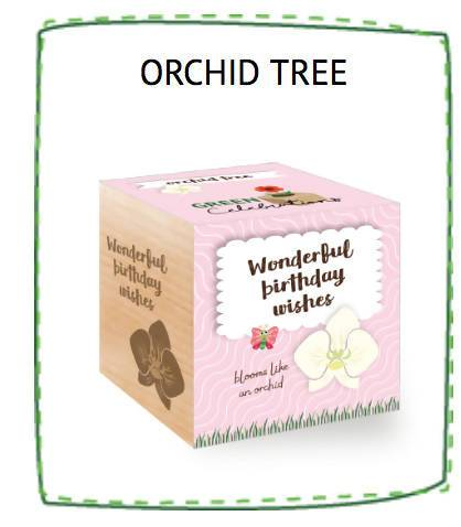 Orchid Tree - Wonderful Birthday Wishes - Plants - The Planet Collection - Naiise
