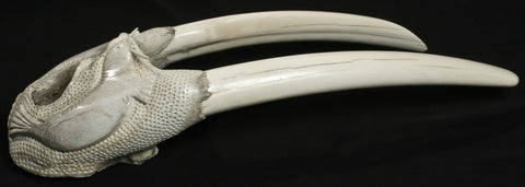 "18"" Walrus Skull with Tusks by Jaypeetee Audlakiak"