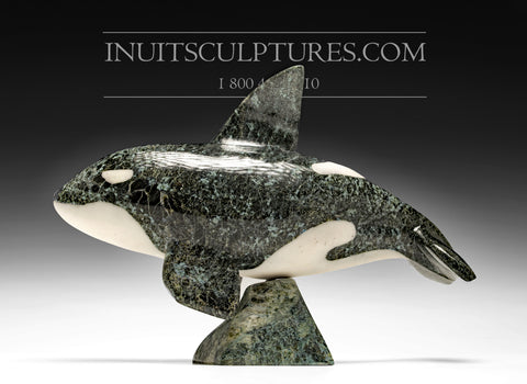 "10"" Orca Whale by Johnnysa Mathewsie"