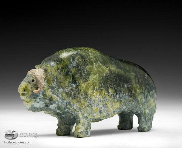 "5"" Greenish Muskox by Joamie Ipeelee"