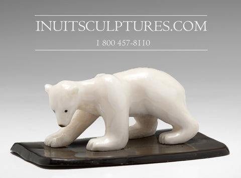 "3"" Miniature Ivory Bear by Tarsis Pillakapsi"