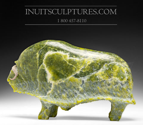 "11"" Apple Green Muskox by Joamie Aipeelee"