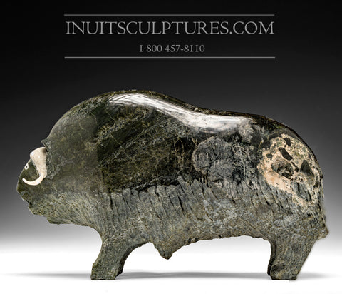 "RESERVED** 11.5"" Dark Muskox by Joamie Aipeelee"
