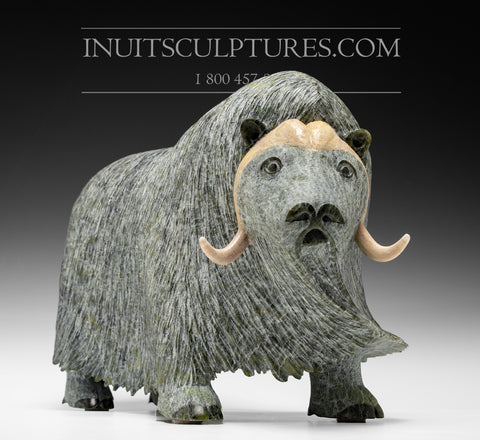 "19"" Iconic Masterpiece Muskox with hump by Lucassie Ikkidluaq"