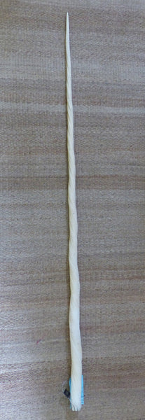 "70"" Narwhal Tusk Ivory"