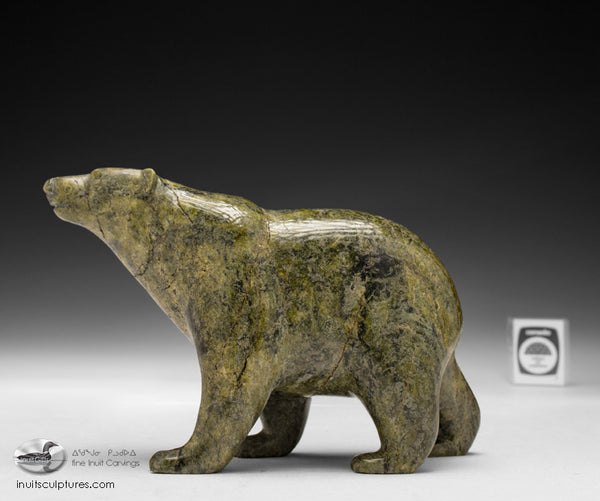 "8"" Prowling Walking Bear by Tim Pee"