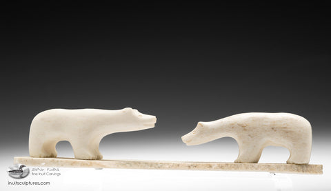 Two Bears from Labrador
