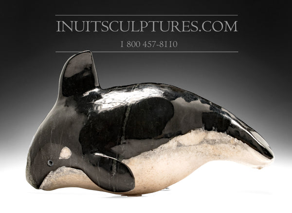 "10"" Orca Whale by Kelly Etidloie"