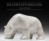 "13"" Scenting White Bear by Famous Kooyoo Peter"