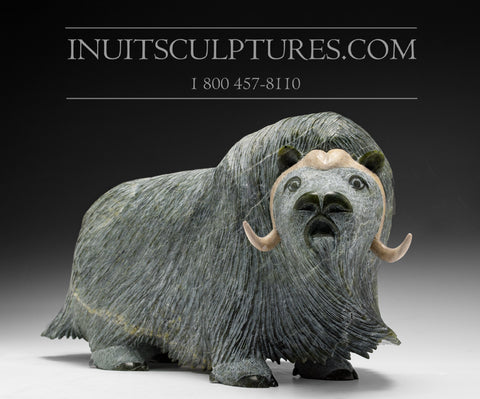 "17"" Huge Masterpiece Muskox by Lucassie Ikkidluaq"