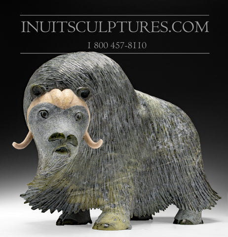 "RESERVED** 20"" Huge Masterpiece Muskox by Lucassie Ikkidluaq"