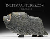 "18"" Huge Masterpiece Muskox by Lucassie Ikkidluaq"
