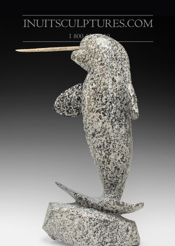 "20"" Speckled Narwhal by Anu Arlooktoo"