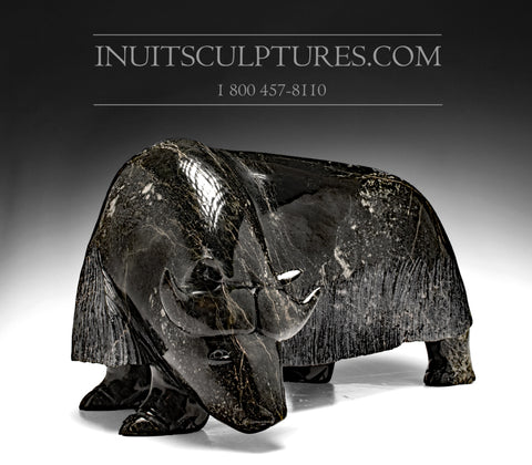 "16"" Dark Powerful Muskox by Noah Jaw"