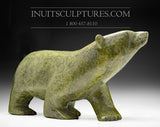 "24"" 125 lbs Rare Arching Back Masterpiece Green Nuna Parr Gorgeous Walking Bear"