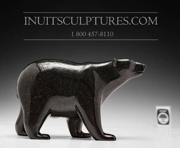 "8"" Black Walking Bear by Tim Pee"
