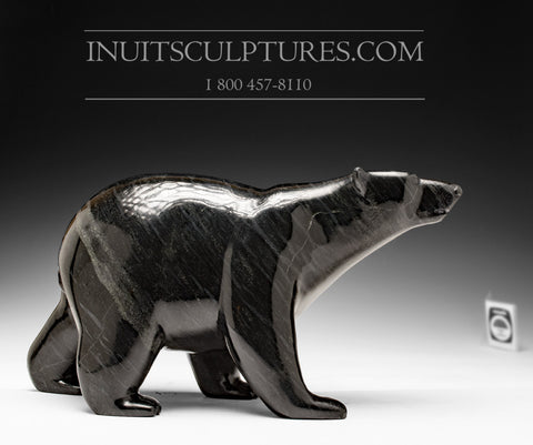 "13"" Black Walking Bear by Tim Pee"