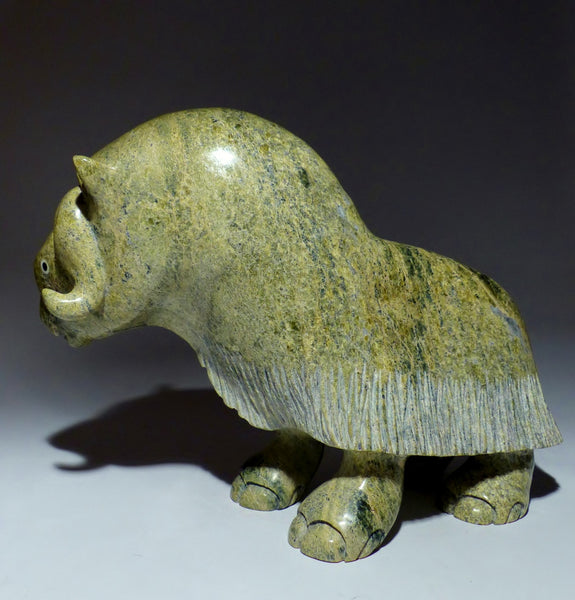 "Gorgeous Green Impressive 15"" Muskox by Toonoo Sharky"