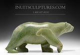 "16"" Unique Colored Walking Bear by Tuk Nuna"