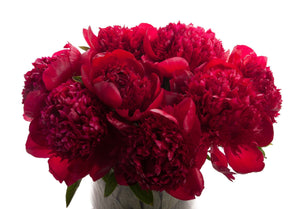 Burgundy Peony Bouquet - Fresh Blooms Flowers