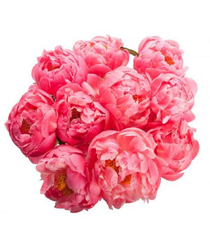 Coral Peony Bouquet - Fresh Blooms Flowers