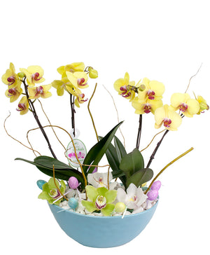 Easter Orchids Planter