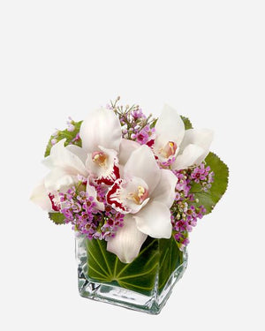Lovely Orchids - Fresh Blooms Flowers