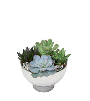Mini Succulent Bowl