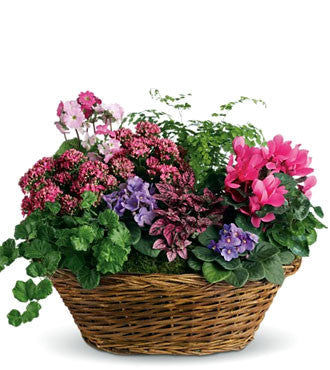 simply-chic-mixed-plant-basket-T97-1A