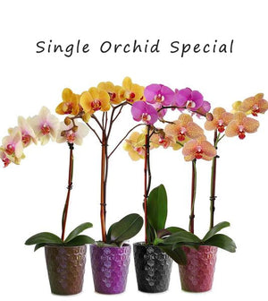 Seasonal Orchids Special