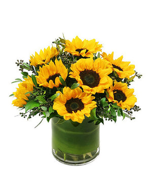 Sunflowers Delight