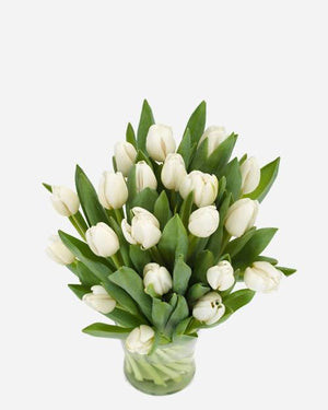 Winter White Tulips - Fresh Blooms Flowers