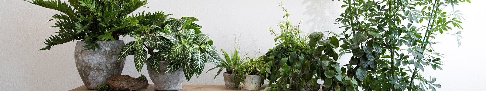 Living Indoor Plants