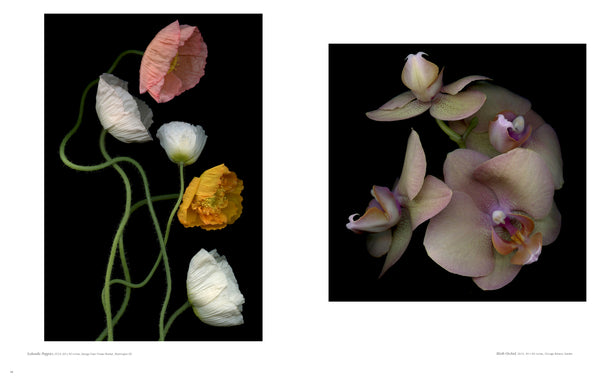 BOTANICALS INTIMATE PORTRAITS BOOK