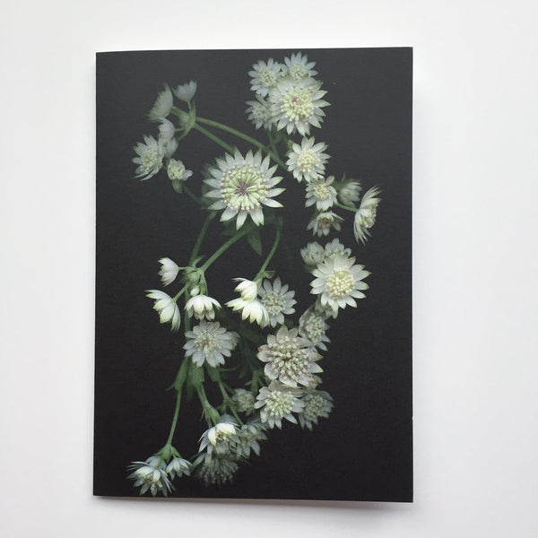 astrantia flowers card.jpg