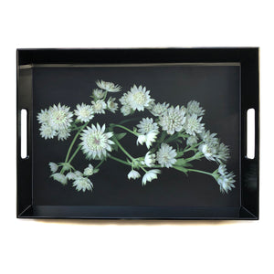 Astrantia Tray