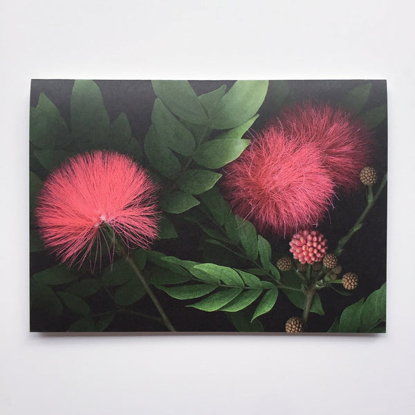 calliandra flowers card.jpg