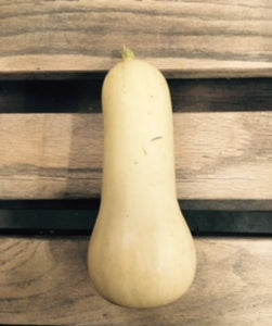 Butternut Squash (1) Ct