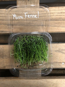 Microgreens Fennel (1) Oz