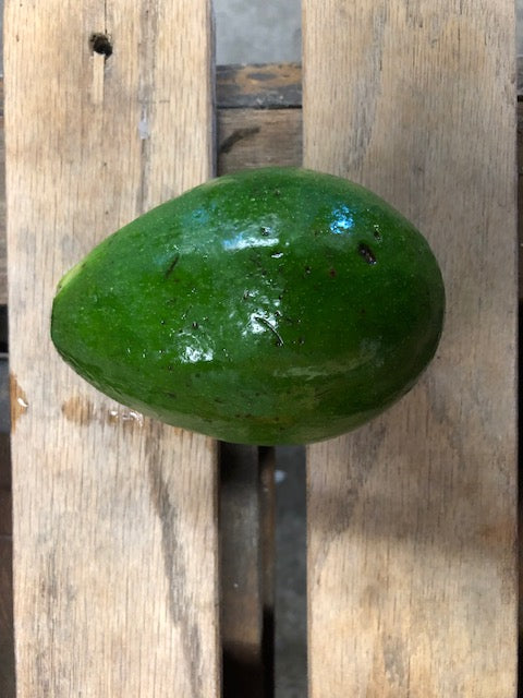 Florida Avocado (1) Ct