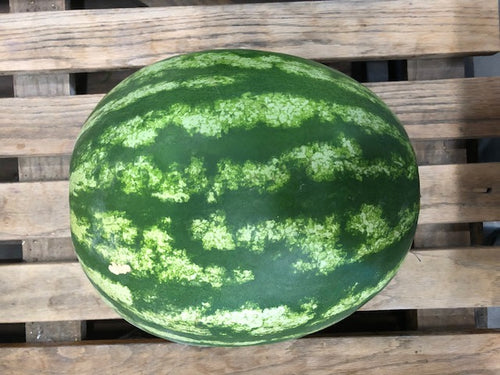 Jubilee Watermelon (1) Ct