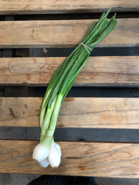 Local Vidalia Spring Onion (2) Bunch