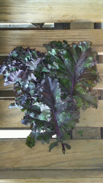 Red Kale (1) Bunch