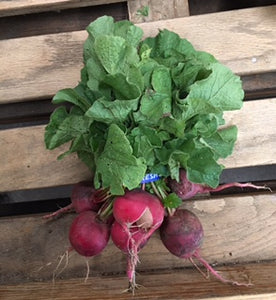 Red Radish (1) Bunch