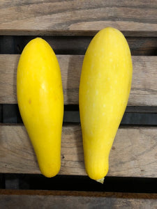 Yellow Squash (2) Ct